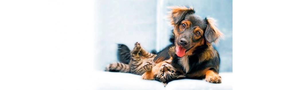 Parapharmacie vétérinaire